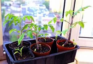 Bohnen Anbauen Anleitung : 17 beste idee n over tomaten pflanzen op pinterest tomatenplanten eetbare tuin en erbsen pflanzen ~ Whattoseeinmadrid.com Haus und Dekorationen
