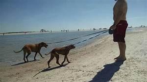 playing at dog beach on honeymoon island With honeymoon island dog beach