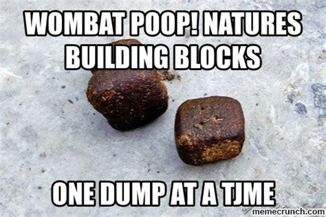 Wombat Memes - wombat poop