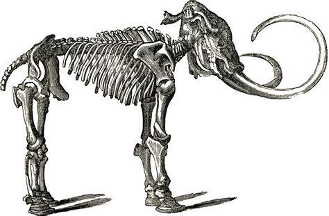 dinosaur bones template    clipartmag