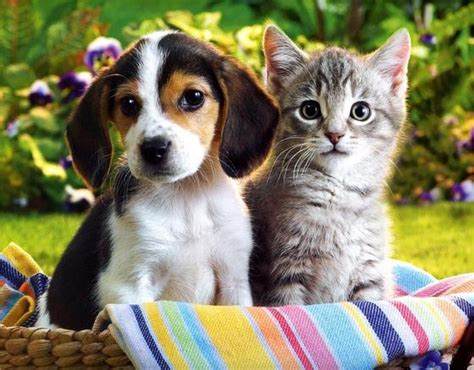 Image result for kitten and puppy