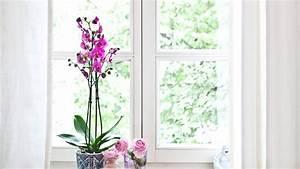 Küchenfenster Gardinen Modern : k chenfenster gardinen reduziert bis zu 70 westwing ~ Markanthonyermac.com Haus und Dekorationen