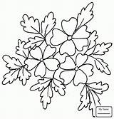Oak Coloring Pages Tree Wreath Printable Leaf Drawing Trees Patterns Leaves Wreaths Oaks Eastern Flower sketch template