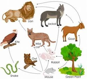 Animal Ecosystem Cycle