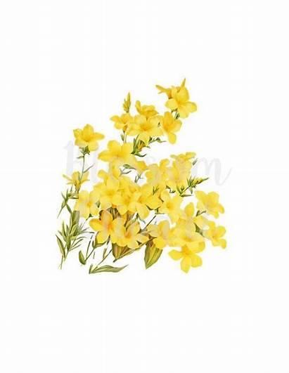 Yellow Flower Clipart Clip Flowers Digital Botanical