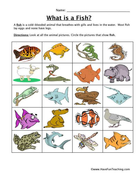Animal Classification Worksheet Homeschooldressagecom