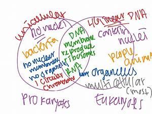 Prokaryotic And Eukaryotic Venn Diagram