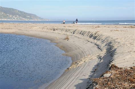 Sandy Beach Ecology Management Scoop