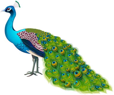 Peacock Transparent Image | Gallery Yopriceville - High ...