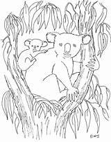 Koala Coloring Printable Animal Colouring Sheets Birthday Animals Australian Coloringpagesbymradron Adron Aboriginal Mr sketch template