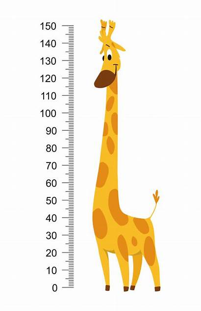 Height Vector Giraffe Meter Chart Wall Illustration