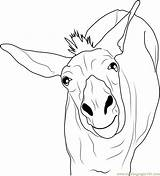 Donkey Coloring Funny Pages Printable Template Coloringpages101 Pdf sketch template