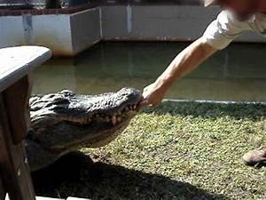 "Alligator Bite - Original AKA ""The Chester Video"" - YouTube"