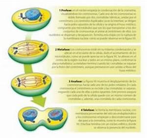 Circulación de materia y flujo continuo de la energia solar en el ecosistema La materia circula