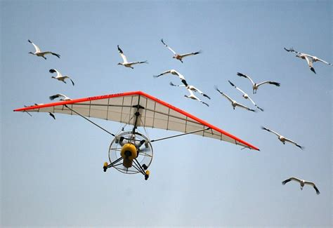 whooping cranes making a comeback