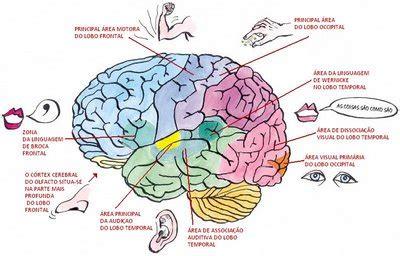 lade bulbo neuroci 234 ncias em benef 237 cio da educa 231 227 o pesquisando sobre