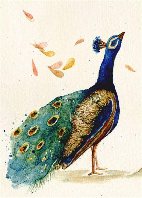 peacocks complaint rachel gilbert