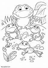 Frog Coloring Frogs Cycle Pages 2480 Pixels sketch template