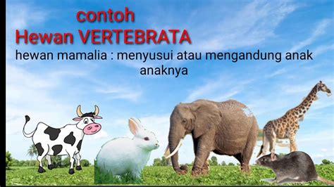 Hewan Vertebrata dan Invertebrata Materi IPA kelas 5 - YouTube