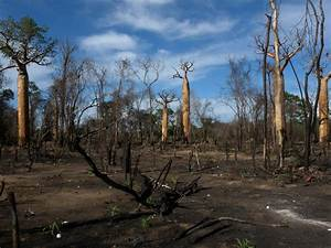 File:Slash and Burn Agriculture, Morondava, Madagascar.jpg ...