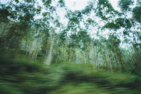 fine art nature photography  jignesh minaxi