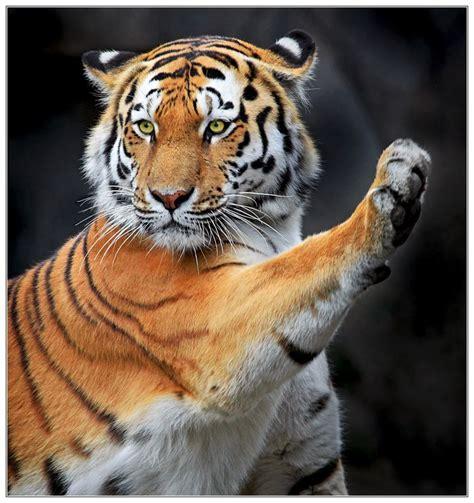 maravilla  mi el animal mas lindooo  existe