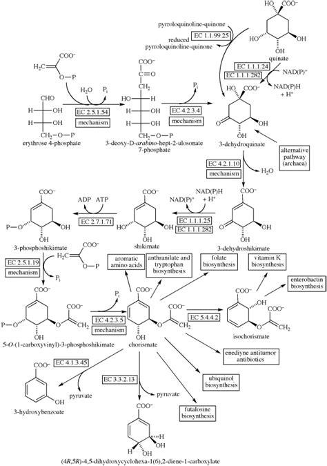 Shikimate Biosynthesis