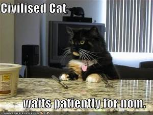 Cute Cats with Funny Captions | Funny cat pictures with ...
