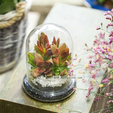 glass cloche dome cover terrarium container miniature