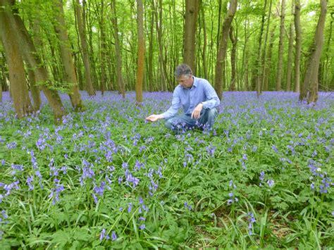 bluebells for sale flower lawns buy