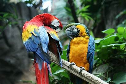 Parrot Bird Macaw Tropical Wallpapers Desktop Backgrounds