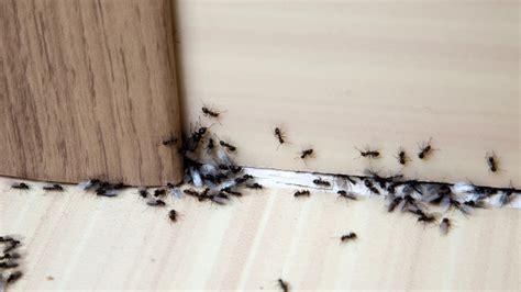 Tipps & Hausmittel Gegen Ameisen Im Haus