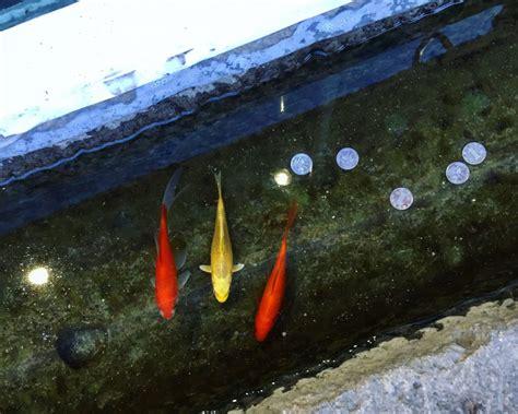 nuit dans un aquarium 28 images re d 195 169 clairage easyled pour eau douce eclairage led
