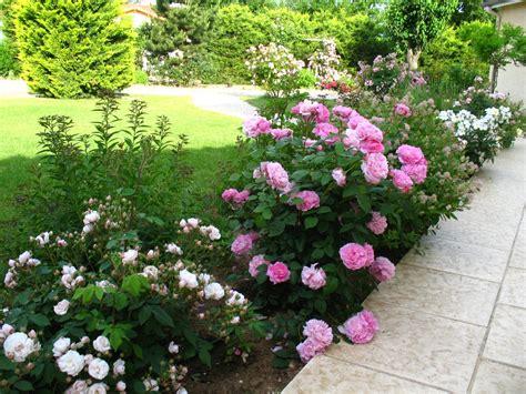 Rosier Jardin De Valloires by Roses Du Jardin Ch 234 Neland Rosier Quot Mary Rose Quot