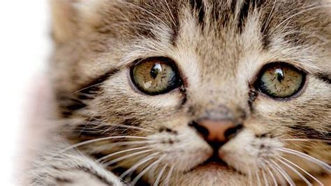 do cats shed their whiskers facts about cats whiskers boxer breed facts