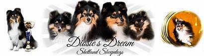 Sheepdogs Shetland Dream Menue