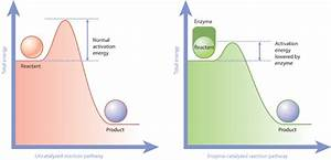 Cell Energy, Cell Functions | Learn Science at Scitable