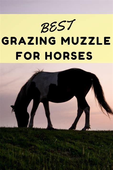horse feed muzzle horses grazing choose