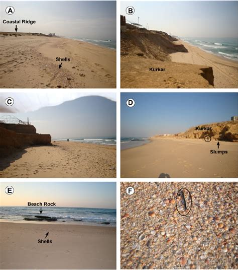 Posts Sandy Beach Ecology