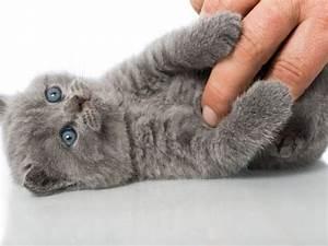 Katzen Fernhalten Von Möbeln : die 25 besten ideen zu bkh auf pinterest bkh kitten ~ Michelbontemps.com Haus und Dekorationen