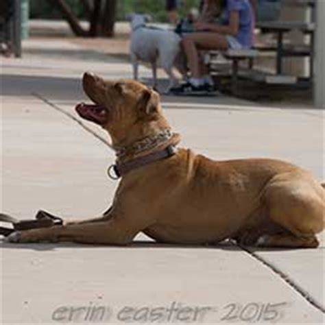 nashville dog training tami mcleod middle tennessee dog