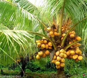 COCONUT TREE PLANTATION: 10+ handpicked ideas to discover ...