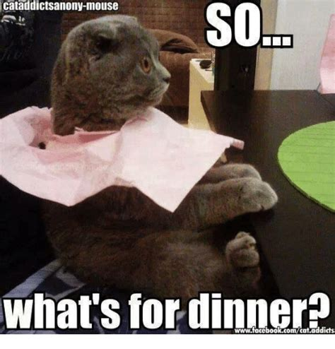 What S A Meme - cataddictsanony mouse so sol what s for dinner meme on sizzle