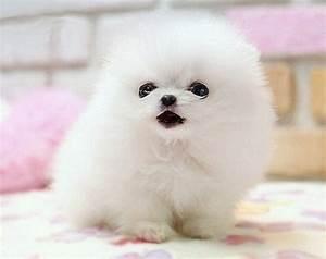 Cute Baby Puppies | ... | Cutearoo | Puppies, Kittens ...