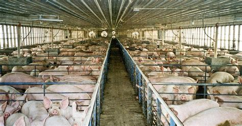 animals scored significant victories    farm bill
