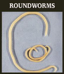 cat roundworms is your cat throwing up worms petcaresupplies
