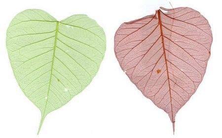 c 243 mo hacer esqueletos de hojas proyectos que debo intentar leaf skeleton diy y skeleton