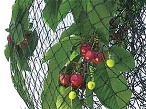 filet protection arbre fruitier filets anti insectes pour arbres fruitiers