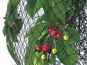 Filet Pour Arbre Fruitier : filet de protection contre oiseaux et insectes ~ Melissatoandfro.com Idées de Décoration