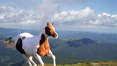 Horse Wallpapers Amazing Horses Running Move Different